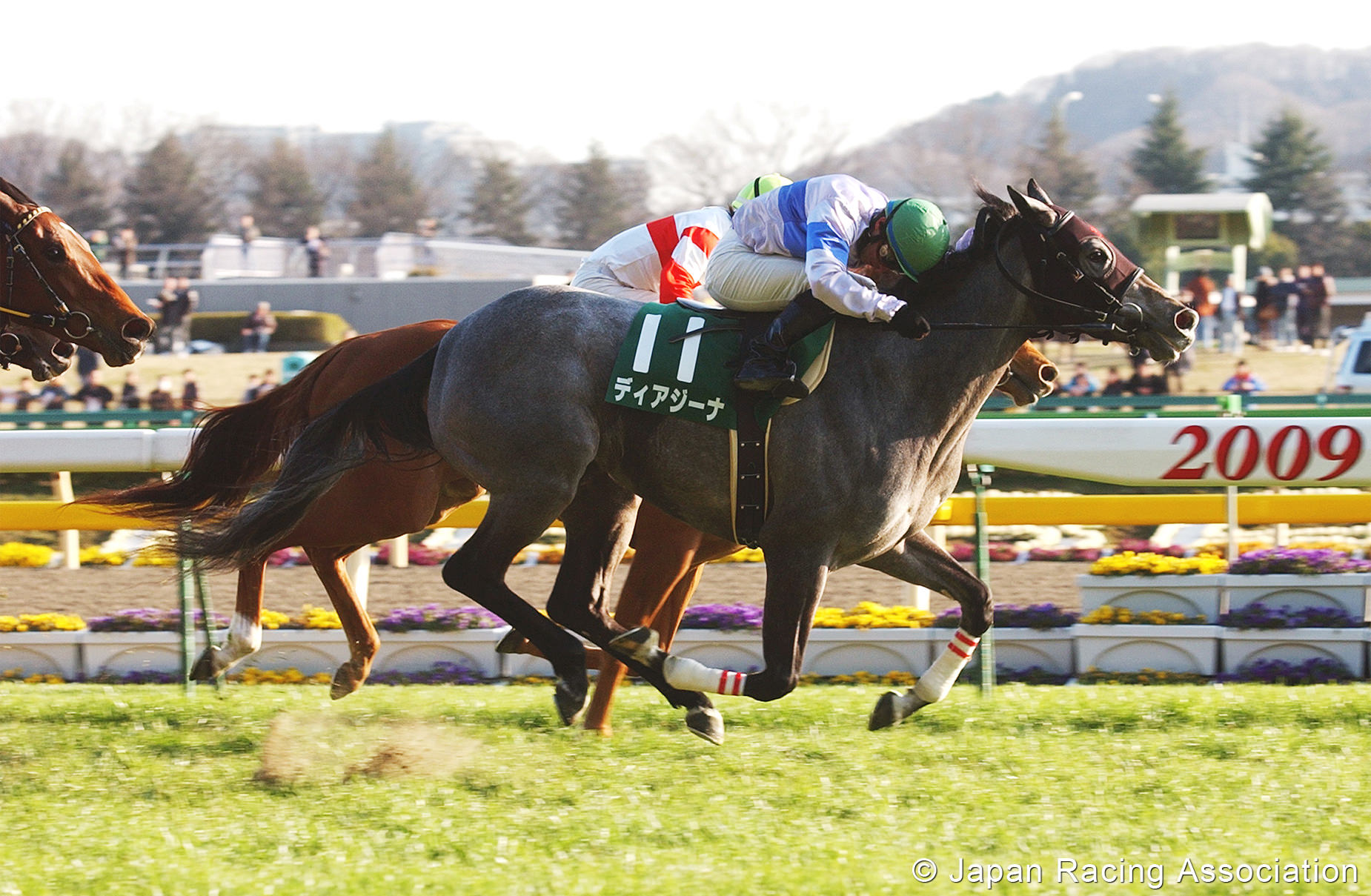 [RACE REPORT]ディアジーナ、クイーンC(GIII)。メジロルマン、未勝利戦 © JRA