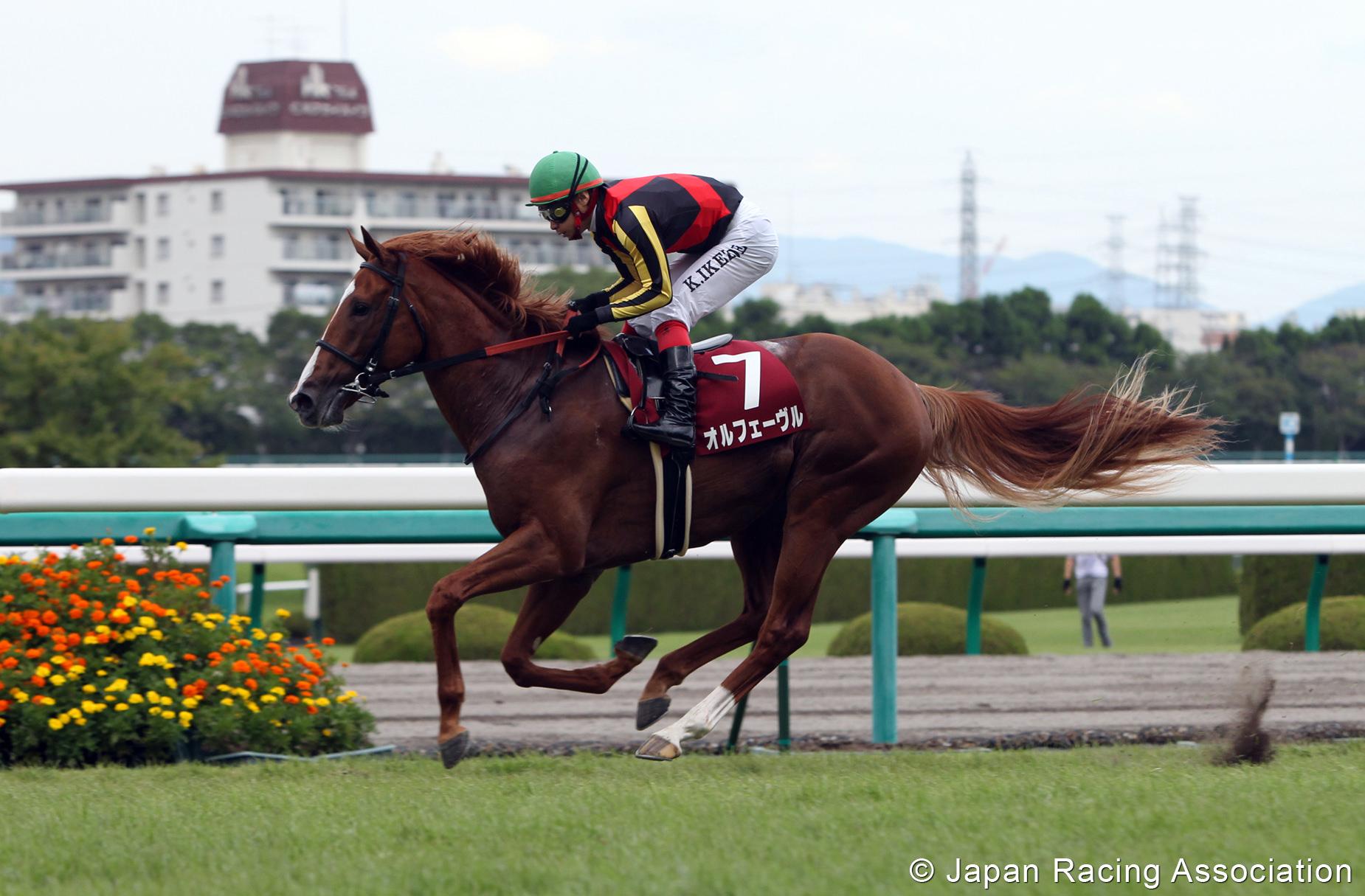 オルフェーヴルが神戸新聞杯(GII)を制覇。三冠へ大きく前進 © JRA
