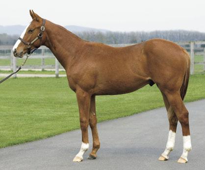 オルフェーヴル産駒、レヴァンテが新規馬名登録
