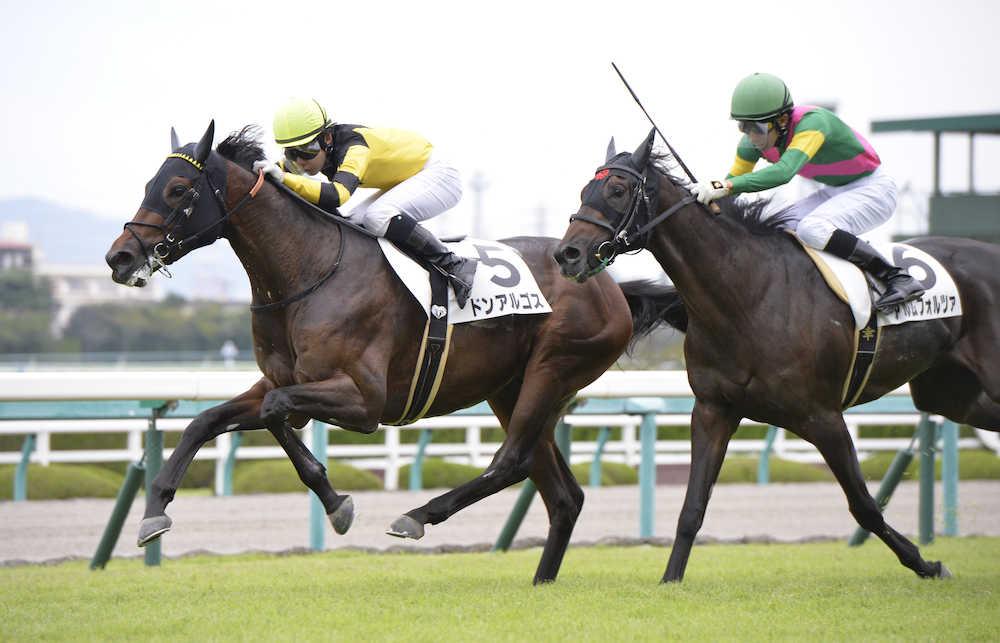 ドリームジャーニー産駒、ドンアルゴスが新馬勝ち