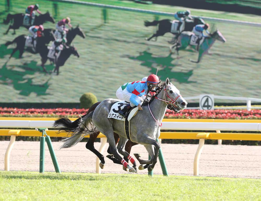 ディアジーナの仔、ジーナスイートが新馬戦を逃げ切り勝ち © スポニチ