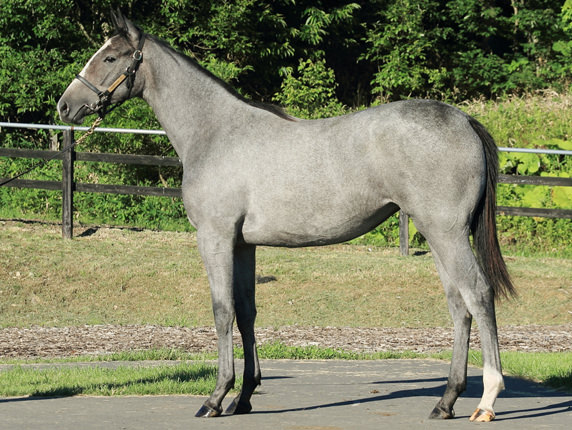 2017年産 牝馬 父:ゴールドシップ 母:セカンドノホシ © 馬市.com