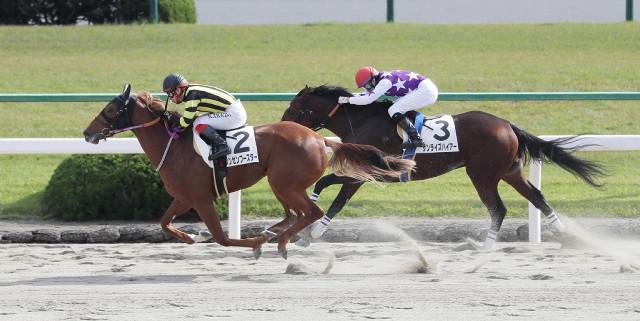 シンゼンブースター(オルフェーヴル産駒)が新馬戦を勝利 © スポーツ報知