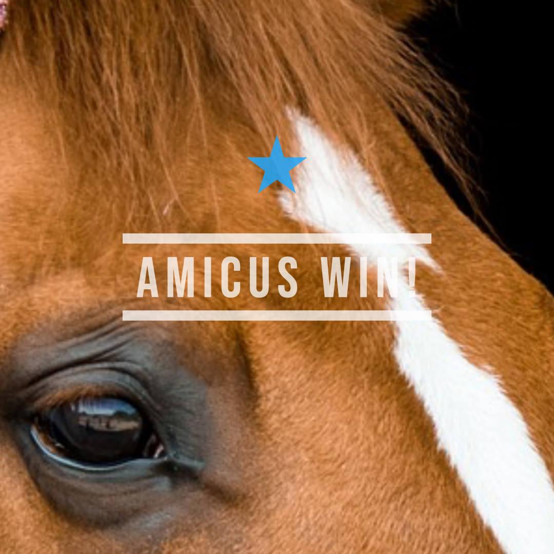 アミークス(オルフェーヴル産駒)が後方から大外を突き抜け初勝利