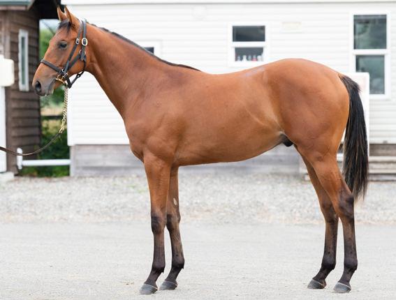 ドリームジャーニー × ミラクルキャンデーの牡馬を、ノルマンディーファームが購買 [サマーセール2019 3日目]