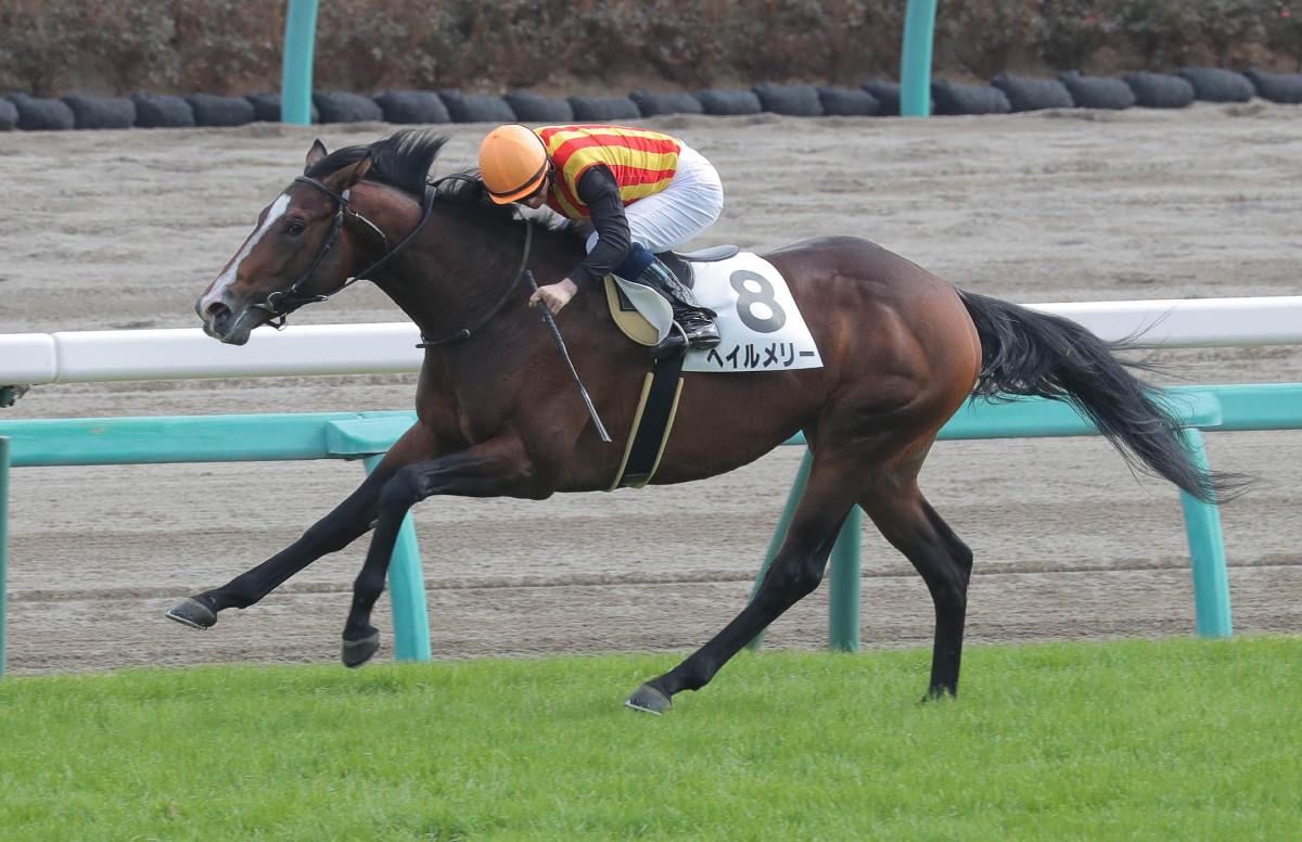 ヘイルメリー(オルフェーヴル産駒)が圧勝で新馬勝ち © スポーツ報知