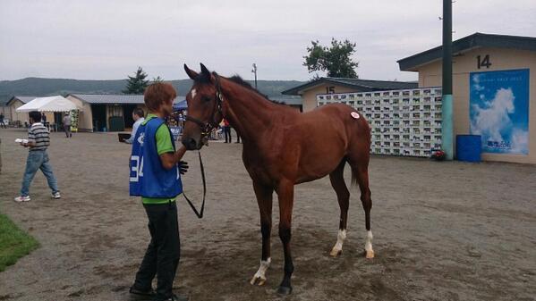 ゴールドアリュール - ビジューブリアン 牝馬