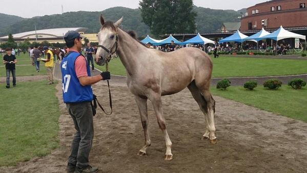 ディープスカイ - エイダイクイン 牡馬