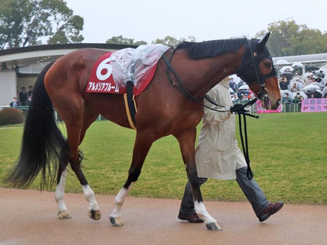 アルメリアブルーム(ドリームジャーニー産駒)が現役を引退。繁殖牝馬に © サンデーレーシング