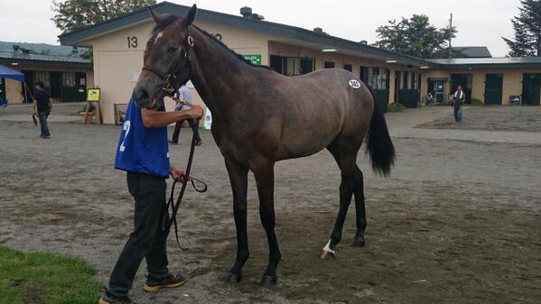 サムライハート – マヤノトリンケット 牡馬