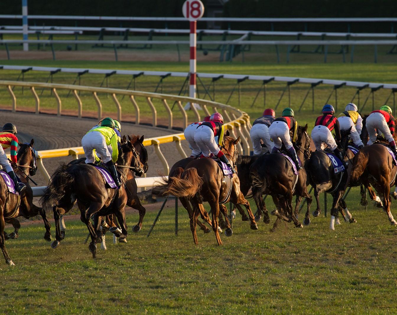 [結果更新] トーアディランの快勝ではじまる福島競馬はドリームジャーニー祭り。北ではシスターフラッグがデビュー。今週のマックファミリー出走馬[7/22, 23]