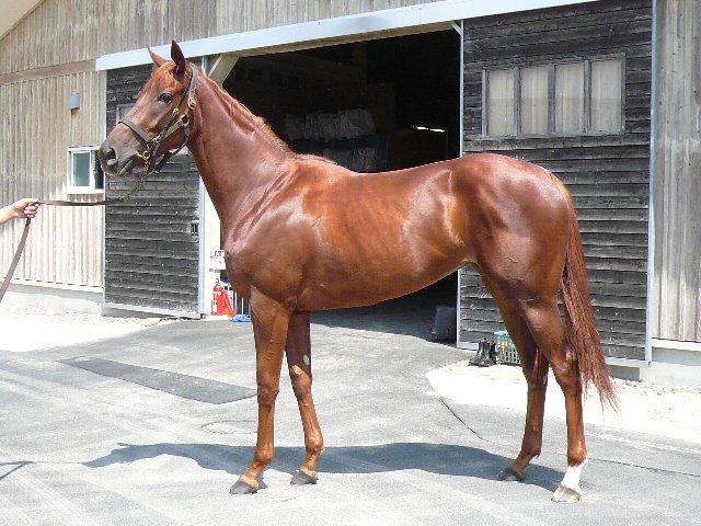 オーロトラジェ、ブルーグローブ、マビヨン(オルフェーヴル産駒)が新規馬名登録