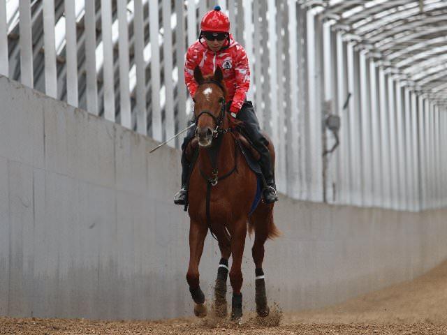 ゴルディロックス(オルフェーヴル産駒)が新規馬名登録 © サンデーレーシング